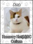 Honorary Catizens of the Hot(M)BC!