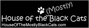 Blogging cats that have their own website now for kitties, kittens, felines of all kinds