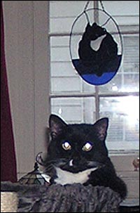 Boni and the Tuxie stainedglass